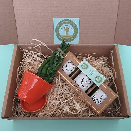 Houseplant, Planter & Candle Gift Box