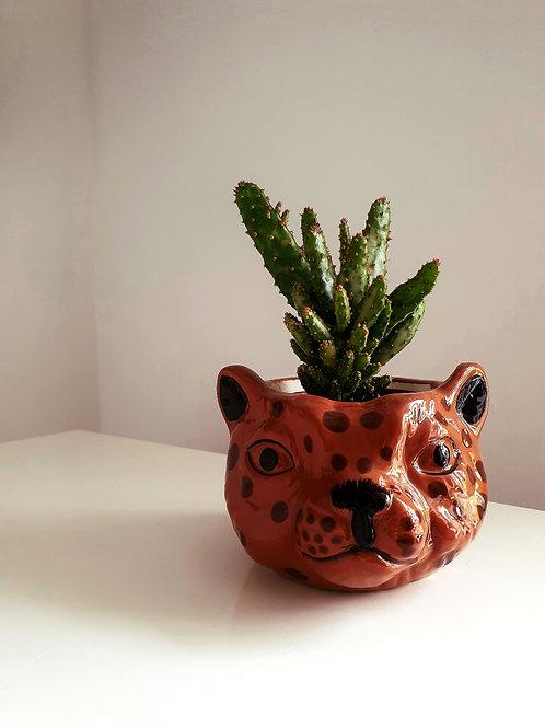 Cactus in Leopard Ceramic Planter