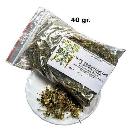 Conium Hemlock grass dry 40 gr.