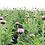 Thumbnail: Maral Root (Rhaponticum carthamoides) 80g.