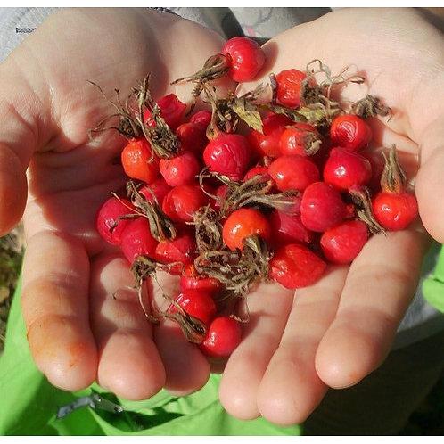 Berries of dried rose hip Siberian (Сушёный шиповник) Frūctūs Rosae 1 lot=1 kg.