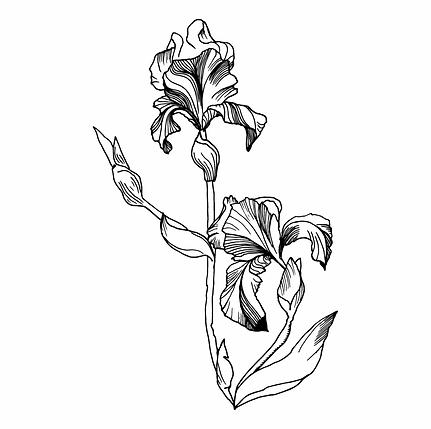 78-786778_single-iris-flower-illustratio