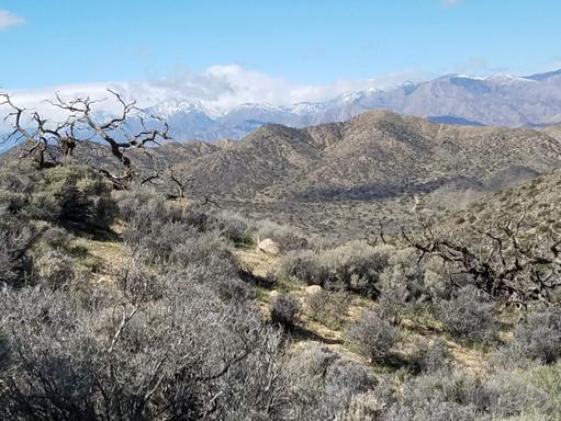 Birth of Spring @ Joshua Tree National Park