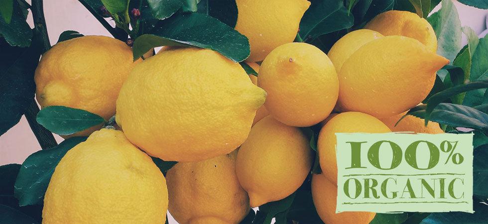 lemon_w980h450.jpg