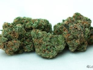 The Top Ten Marijuana Strains for Migraines