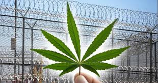 Why People With Non-Violent Drug Charges Should Be Released From Prison