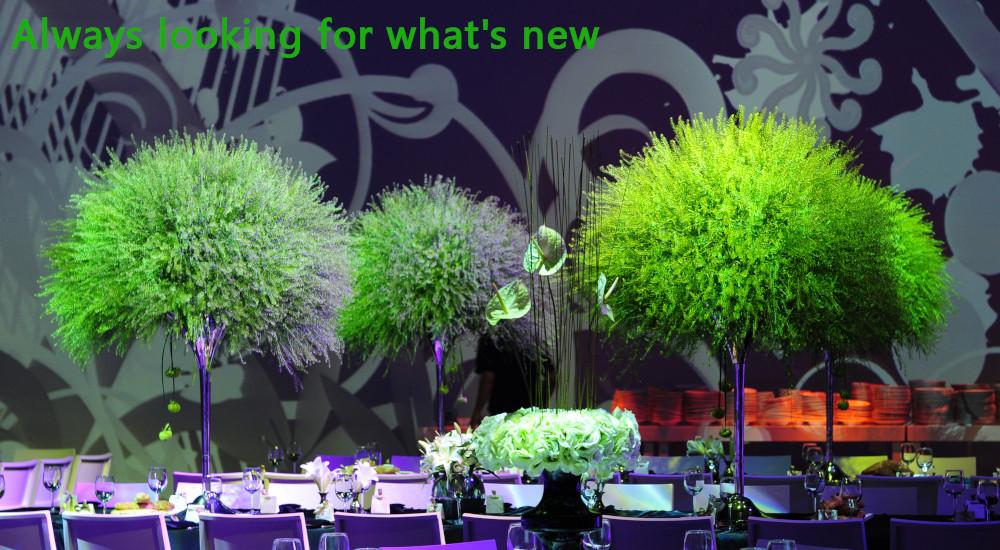 Alma green and tall.jpg