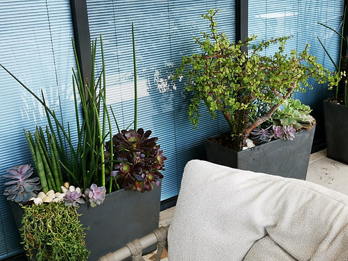 עיצוב גינת סקולנטים במרפסת הבית