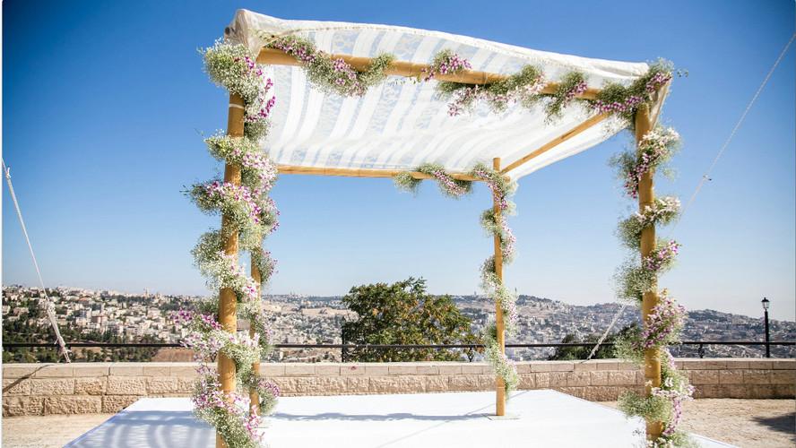 Bamboo at Jerusalem.jpg