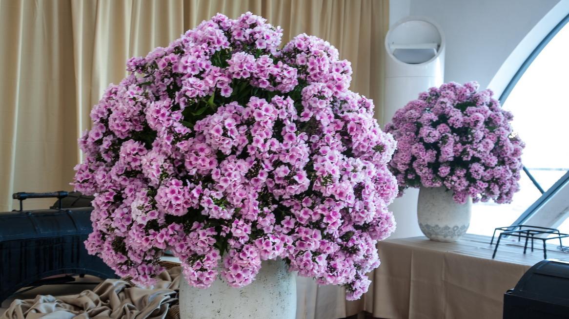 shades of pink 5.jpg