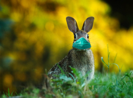 Face à la peur, quel lapin êtes vous ?