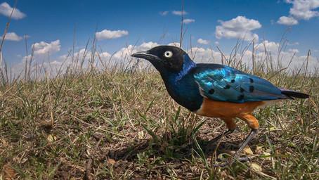 Starlings world