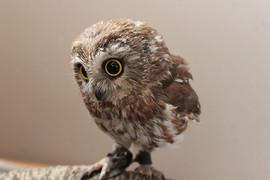 owl 3.jpg