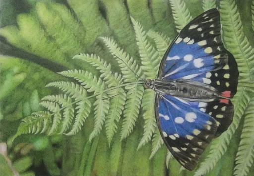 The Butterfly effect -  Chitra Gopalakrishnan, illustrated by Chandan Kumar