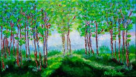 Birch in spring