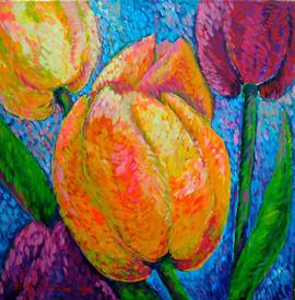 Tulipani bellezza