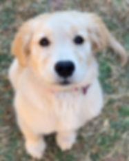 Sammy's Dog Walking Service - Portfolio - Christ First Web Design - Dallas - Plano - Texas Web Design