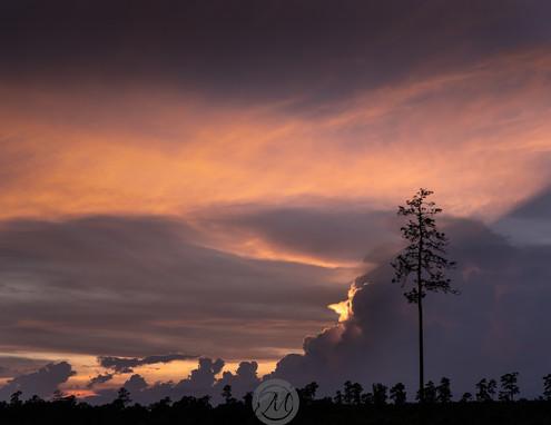 Loblolly Sunset