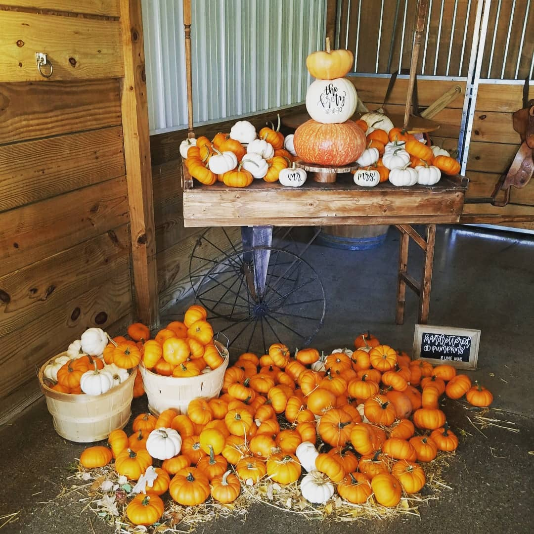 Pumpkin Booth