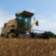 麦かり河川800_800.jpg