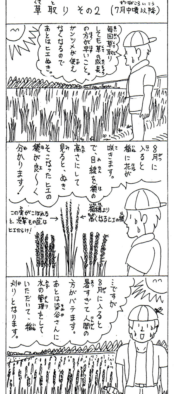 米クラブ農作業【草取り②】