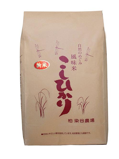 風味米 こしひかり 10kg