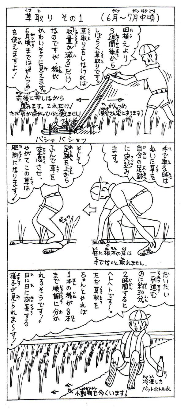 米クラブ農作業【草取り①】
