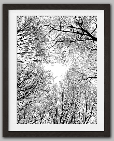 Winter Trees Signed Print