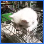 Einkaufen beim Tierbedarf