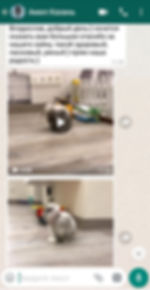 Screenshot_20190707_122844_com.whatsapp.