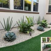 Backyard Plant Redesign