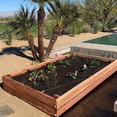 Raised Backyard Vegetable Garden