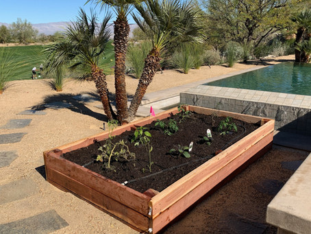 Spring Tips for Fertilizing Your Desert Landscape