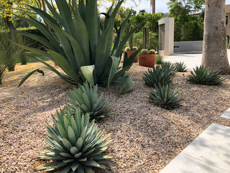 Water Saving Tips for Your Desert Landscape