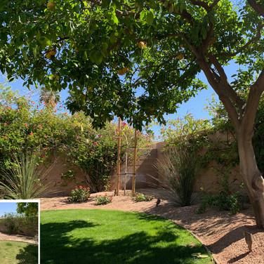 Shady Backyard Corner