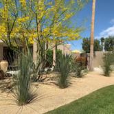 Desert Oasis Landscape