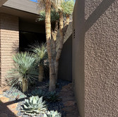 Modern Desert Entryway