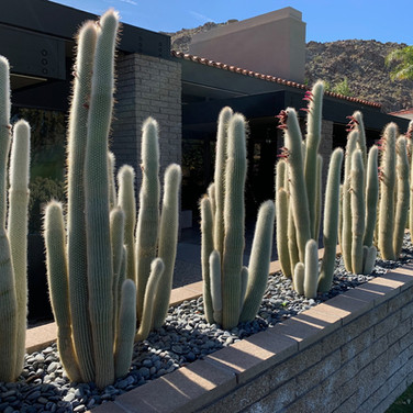 Backyard Cactus Planter