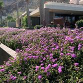 Purple Plant Landscape