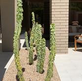 Cactus Planter