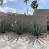 Agave and Pavers