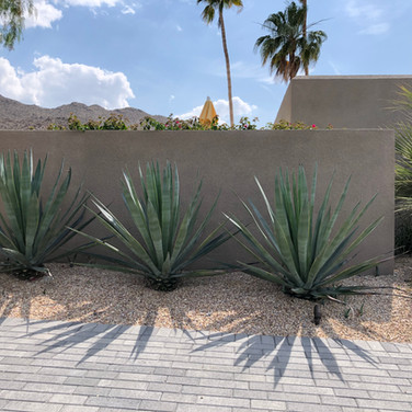 Agave Accents