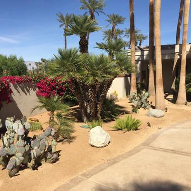 Drought Tolerant Landscape Entryway