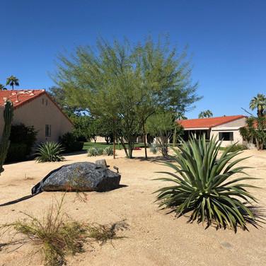 Front Yard Desert Landscaping