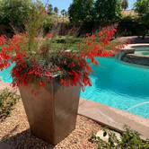 Backyard Drought Tolerant Plants