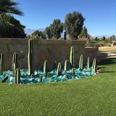 Whimsical Cactus and Glass