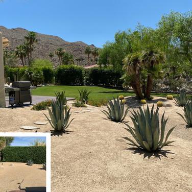 Palm Desert Side Yard Remodel