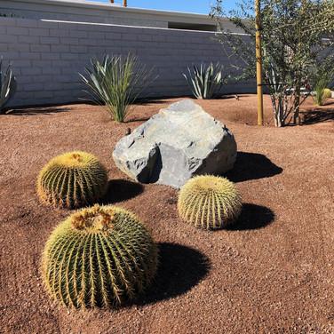 Draught Tolerant Plant Design