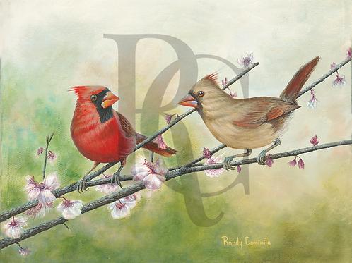 """""""Cardinals"""""""