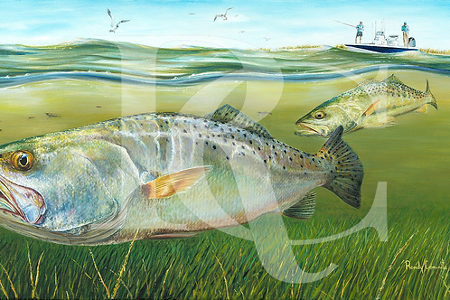 """Speckled Trout"""